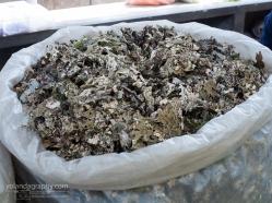 Edible Moss